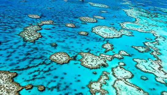 Deloitte put the value of Great Barrier Reef at $56 billion